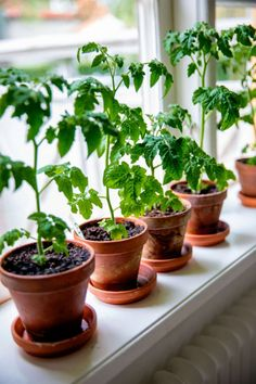 Planter Pots, Fingers, Tips, Chili, Gardening, Projects, Lawn And Garden, Chile, Chilis