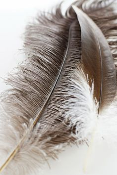 Taupe Feather