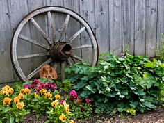 Wagon wheels add a rustic appeal to a flower garden or home interior. Description from pinterest.com. I searched for this on bing.com/images