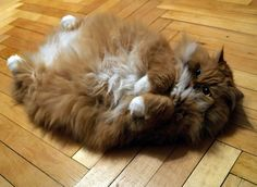 catasters:  It's so fluffy, I'm gonna die!