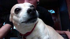 My Buddah Baby Dog