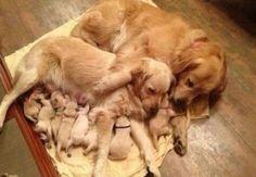 Und diese Familie kuscheln Sitzung.