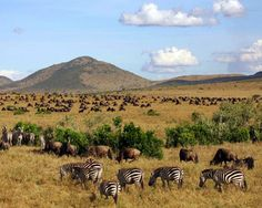 Maasai Mara Game Park in Kenya - I'm going here in October!