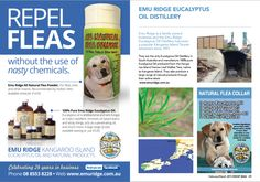 Recently, our All-Natural Flea Powder and Eucalyptus Oil that we sell at Emu Ridge was featured in Woof Mag because they like to promote natural products and remedies to help and care for your dog.