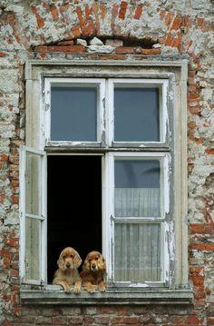 dogs in a window