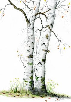White Birch by Mary Tuomi White Birch Painting - White Birch Fine Art Print Watercolor Trees, Watercolor Landscape, Landscape Art, Landscape Paintings, Watercolor Paintings, Tree Paintings, Encaustic Painting, Watercolours, Birch Tree Art