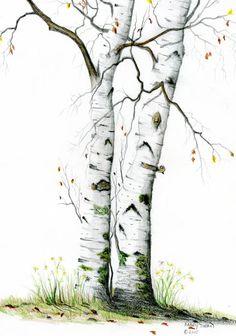 White Birch Painting - White Birch Fine Art Print