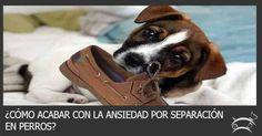 Aprende aquí cómo acabar con la ansiedad por separación en perros. Ingresa Aquí >>> http://sobreperrosygatos.com/ansiedad-por-separacion-en-perros/