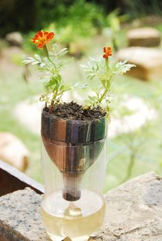 #Ideas : Self-Watering Seed Starter Pots