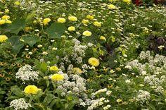 Blomsterfrøblandinger