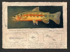 The number one resource for Fishing gear and information Pike Fishing, Sea Fishing, Trout Fishing, Kayak Fishing, Fish Tales, Cool Fish, Fishing Photography, Fish Drawings, Inspirational Artwork