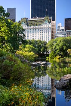 Pond in Central Park, New York City