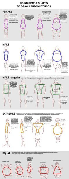 Just a chart with some torso shapes! Face n Eyes -goo.gl/BnSYO0 Noses -goo.gl/RI8foZ