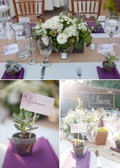 violet blanc succulentes