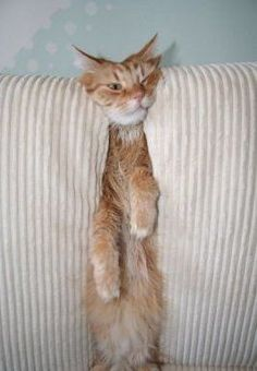 funny cat pictures - #Funny