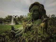 Montréal : des chefs-d'œuvre végétaux d'une rare beauté