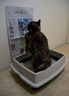 Well look at that....the cat actually read the newspaper!!! Who would have thought it could be so simple! Ha!