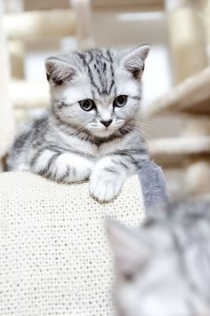 Silver tabby. The kitty of my dreams...