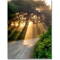 Trademark Fine Art Sunlight Through Trees Canvas Art by Michelle Calkins, Size: 35 x 47, Multicolor