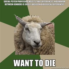 sociology student sheep
