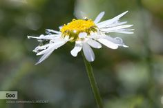 Spring by GiovanniChiossiIce. Please Like http://fb.me/go4photos and Follow @go4fotos Thank You. :-)