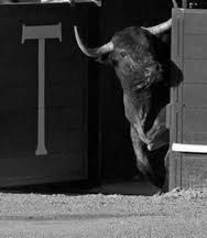 """Résultat de recherche d'images pour """"toro bravo"""""""