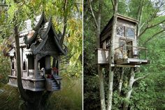 Amazing Treehouse_The Stubble_9