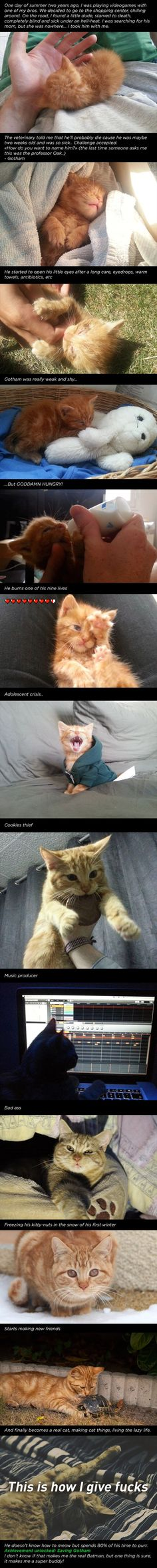 Story of a Cat named Gotham - I love people that are able to do this sort of thing!