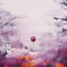 * 通常モード * * 2017.04.15 * #indies_gram #reco_ig #tv_flowers #royalsnappingartists #heart_imprint_vip #closeup_archive #as_archive #rsa_ladies #natureromantix #moodynature_elite #tv_allnature #rsa_vsco #dof_brilliance #vzcomacro #macro_vision #transfer_visions #tv_depthoffield #tv_living #airy_pics #flowersandmacro #global_ladies #team_jp_flower #explore_dof #tokyocameraclub #indies_spring2017 #はなまっぷ