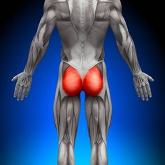 BUTT-OLOGY 101: HOW TO ENHANCE YOUR GLUTEAL MUSCLES maximus, glute muscles, glute anatomy, glute exercises, bigger butt