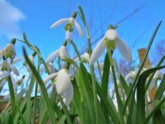 Voorjaar in Den Hoorn, Zuid Holland