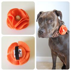 This felt flower is the perfect accessory for your sweet girl! You can choose it in the flower button style as shown above or the flower ruffle style Dog Crafts, Animal Crafts, Diy Dog Collar, Dog Clothes Patterns, Animal Projects, Dog Costumes, Dog Bows, Diy Stuffed Animals, Pet Clothes