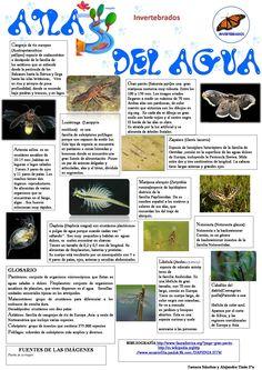 Invertebrados Autoras: Alejandra Tizón y Tamara Sánchez