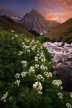 https://flic.kr/p/yc4ARB | In the valley | Every July, the San Juan mountains are dotted with a plethora of wildflowers. I was lucky enough to be there at right time. This image was taken during a hike in the valley of Mt Sneffels and is a blend of 7 images for focus stack and dynamic range. Thanks for looking! Please check my FACEBOOK | 500px | Tuchong