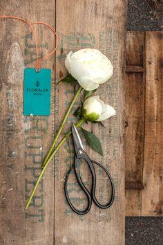 Branding für Floralia von La Mamzelle