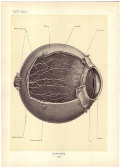 old medical images - Google Search