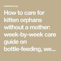 How to care for kitten orphans without a mother: week-by-week care guide on bottle-feeding, weaning, solid food, as well as spay neuter and adoption. Newborn Kittens, Baby Kittens, Cats And Kittens, Kitten Food, Kitten Care, Kitten Growth Chart, Feeding Kittens, Kitten Formula, Baby Weaning