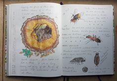 Study Board, Science, Nature Study, Nature Journal, Gcse Art, Scrapbook Journal, Sketchers, Sketchbooks, Watercolors
