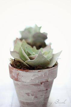 DIY: paper succulent