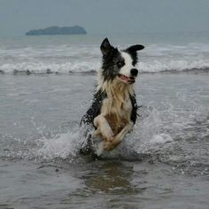 Border Collie and beach...the best of two worlds :)