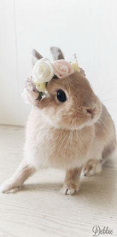 bunny chic ~ Debbie ❤