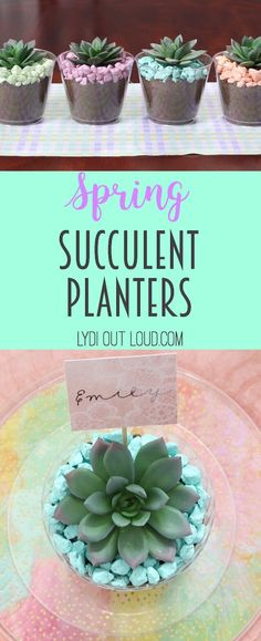 Beautiful colorful succulent planters - perfect to make place cards for a spring brunch!
