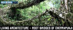 https://www.google.com.au/search?q=root bridge india