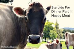 This is part 2 of Steroids for Dinner. I will be exploring alternatives to eating industrial meat products and the labels on meat products. They can be both confusing and misleading. / http://kitchen-rag.blogspot.com/2012/03/steroids-for-dinner-part-ii-happy-meat.html