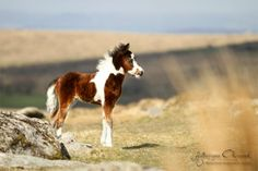 listed under Other Horses - Equine Photography by Katarzyna Okrzesik via photo-equine.com