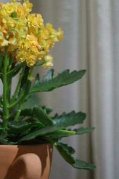 Flores/Plantas