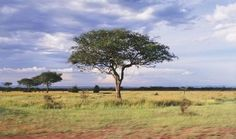 savanna | ecological region | Britannica.com