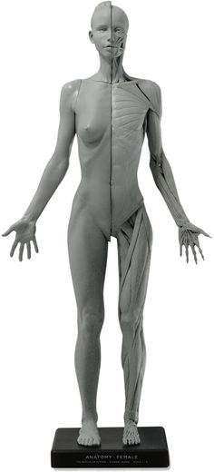 Anatomy figures for anatomy studies Head Anatomy, Anatomy Study, Body Anatomy, Anatomy Art, Human Poses Reference, Female Reference, Body Reference, Anatomy Reference, Art Reference