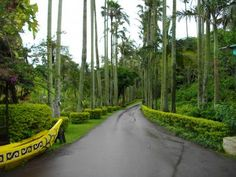 Botanic gardens, Okinawa
