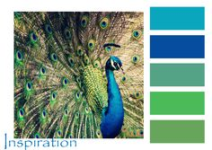 Peacock color palette- I WILL have a peacock room in my future house